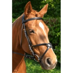Mexican Bridle